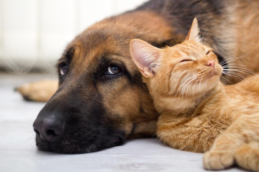 Jak Wygląda Procedura Adopcyjna Psa Lub Kota